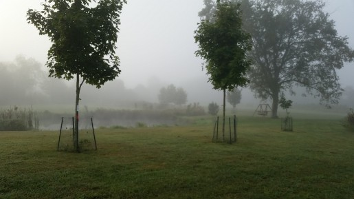 Foggy Morning, Elkins, WV